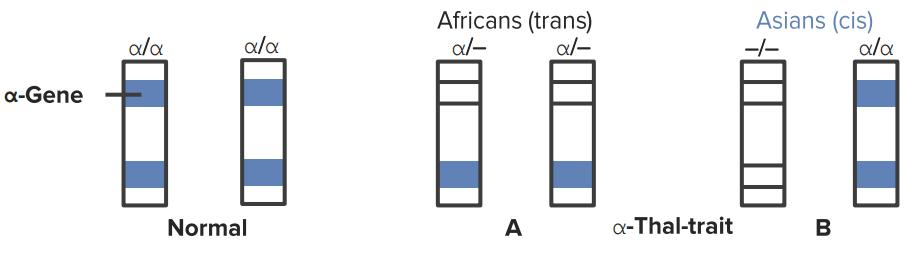 thalassemia GENE α地贫基因型