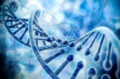 基因可能能解开皮肤老化的奥秘